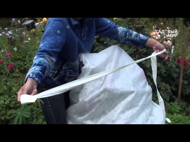 Как уберечь георгины от осенних заморозков. Сайт Садовый мир