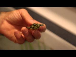 Two-headed Baby Turtles! Kamp Kenan Bonus