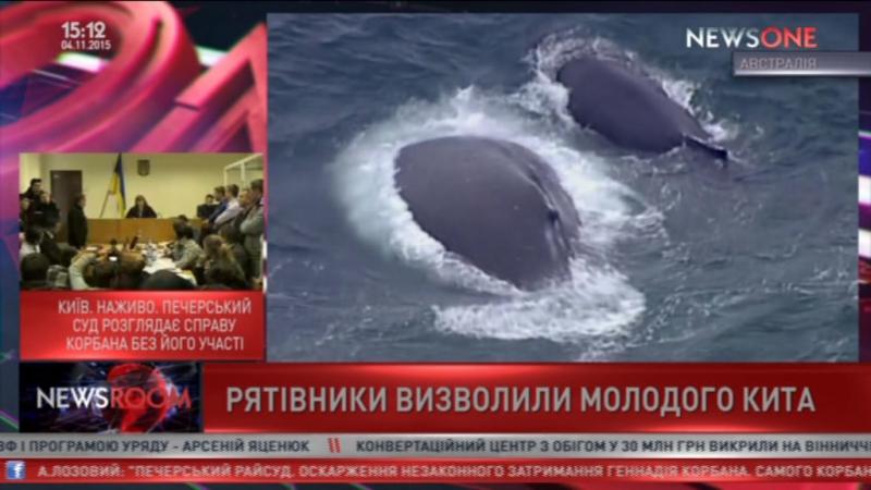 Самка кита спасла детеныша из ловушки для акул