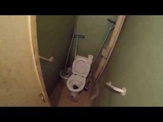 Гигантская крыса в унитазе. Giant rat in the toilet.