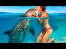 Позитивное видео для поднятия настроения видео про дельфинов