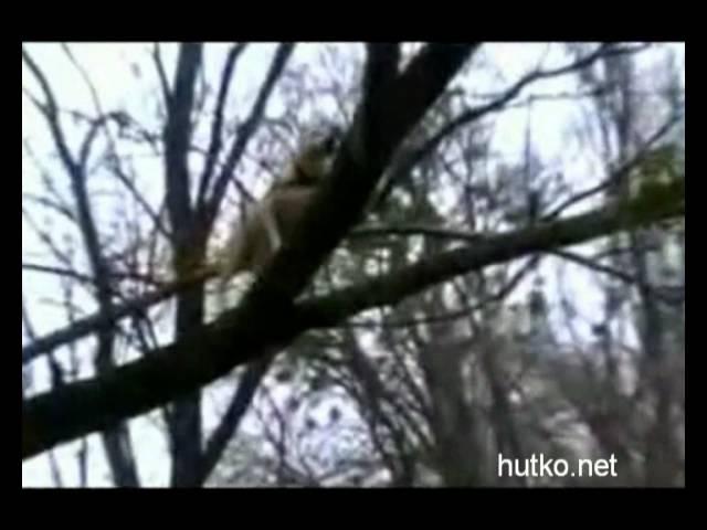 Собака исполняет классные трюки Паркур в Черновцах