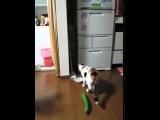 Кот и страшный  огурец
