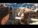 Goat disputes and spits on Man - Козел плюется и спорит с человеком ! - Video Dailymotion