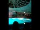 Выступление дельфинов в Минском дельфинарии Немо. Финал. 08.08.2015