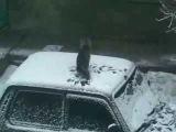 Веселый КОТ и снег