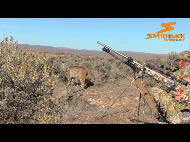 Up Close and Personal Bobcat - Switchback Outdoors