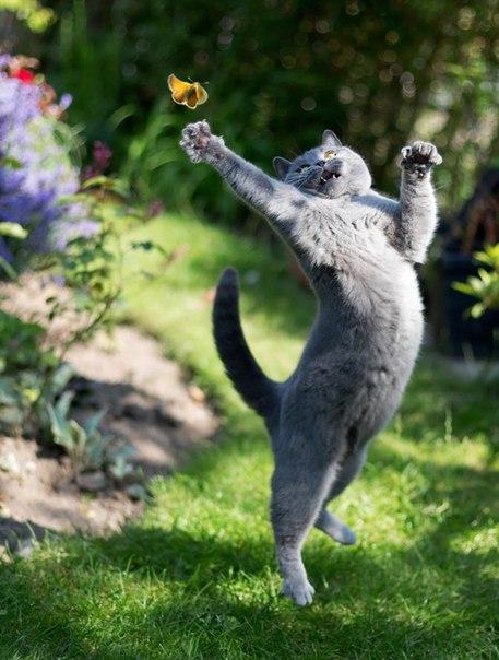 PuG1JYgDMCM - 19 лучших моментов из жизни кошек
