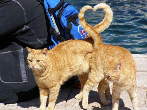 jkG5ldRBLV4 - 19 лучших моментов из жизни кошек
