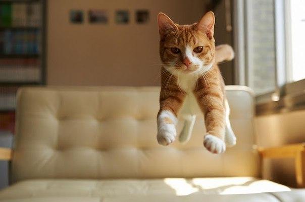 stz3e 2UAFc - 19 лучших моментов из жизни кошек