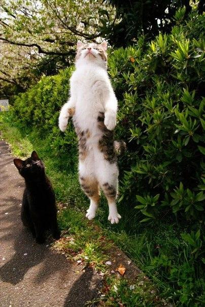 Hmywi0yxHhI - 19 лучших моментов из жизни кошек