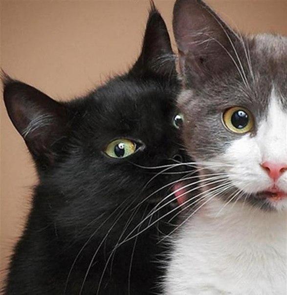 SZN5j8Us ug - 19 лучших моментов из жизни кошек