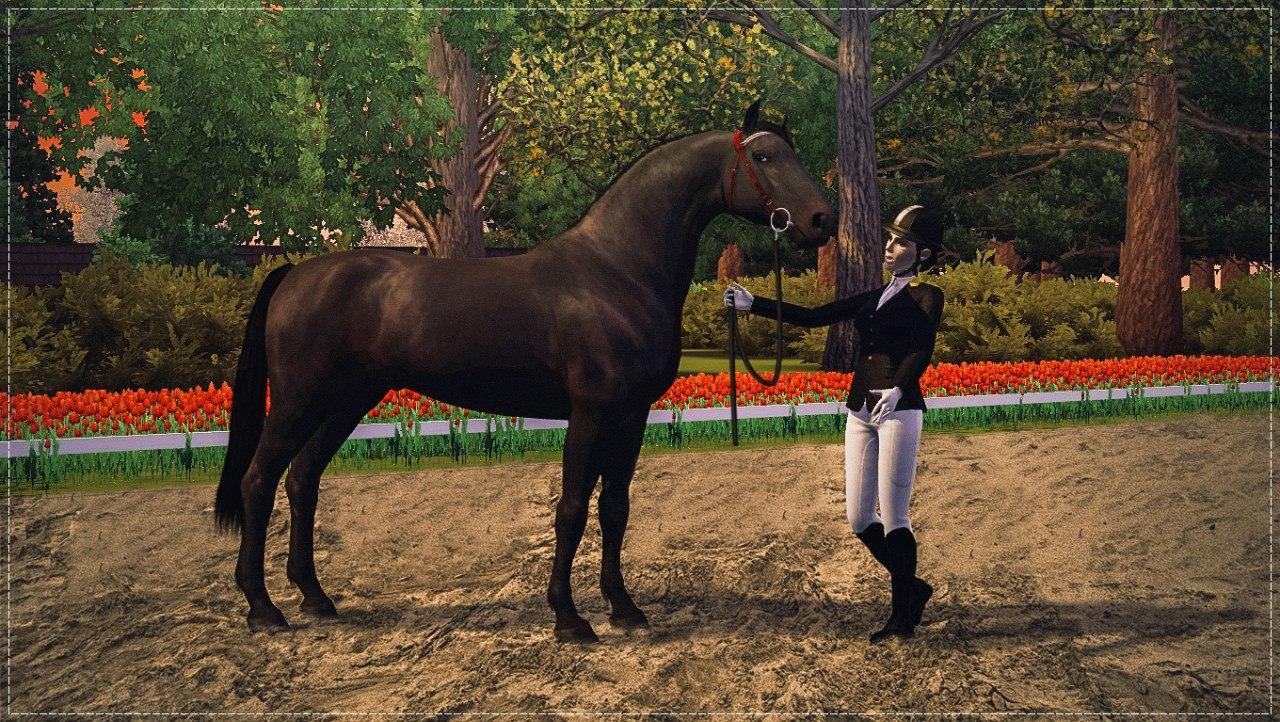 Регистрация лошадей в RHF 2 - Страница 37 XnK08snlQmk