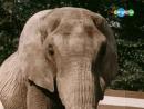 Песенка про розового слона - из х.ф. Боба и слон. 1972.