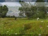 Украинская народная песня- Ой, у вишневому саду