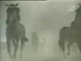 video_WaP_Ka4Ka_Ru_7886501000