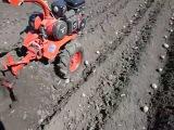 Посадка картофеля, мотоблок Салют  - апрель 2013