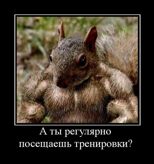 Налоговики задержали на Закарпатье крупную партию биодобавок для спортсменов на полтора миллиона гривен - Цензор.НЕТ 71
