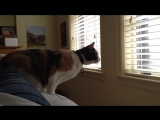 Funny Cats Jump Fail