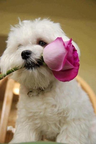 самара постельное белье семейное розы и жемчуг купить