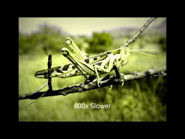 Crickets Chirping Slowed Down 800 (creepy)