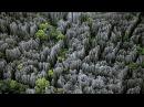 Каменный лес на Мадагаскаре - Интересные факты