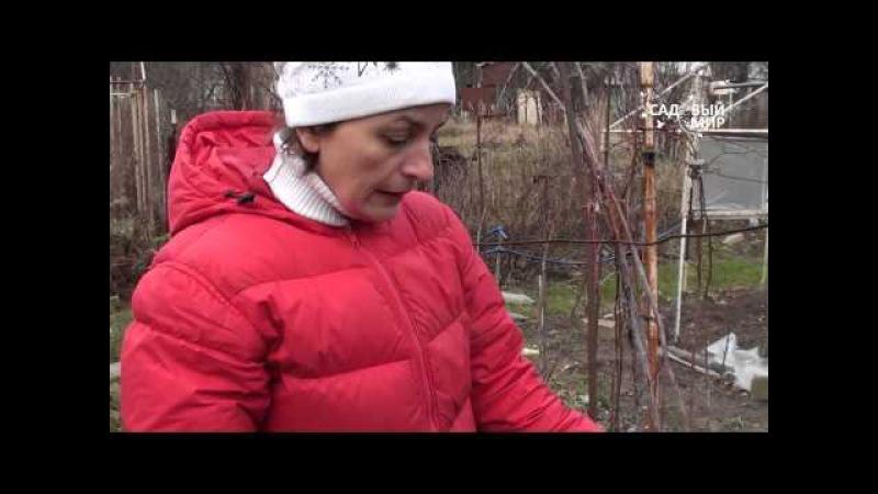Обрезка малины на зиму. Правила ухода за малиной. Сайт Садовый мир