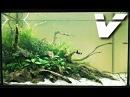 Учебный фильм для начинающих аквариумистов от Tetra