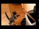 Смешное видео про кошек - Супер видео приколы! Забавные кошки бокс выпуск 3