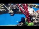 москвариум. рыбы, акула. мурена зеленая, мурены леопардовые. на голове зеленой мурены - креветка-доктора