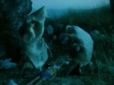 Приключения Буратино фильм