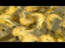 Oxxxymiron Хитиновый Покров Полная версия