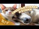 Самые смешные кошки и собаки · Приколы про животных 2015 · Cats and Dogs Compilation