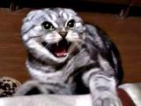 СМЕШНЫЕ КОШКИ ПРИКОЛ КОТ Vampire cat a new trick 2016