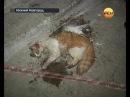 У кота 9 жизней. Экстренный вызов 112. РЕН ТВ.