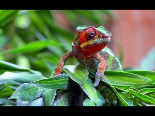 Планета мутантов Австралии - Animal Planet Документальные фильмы о животных.