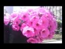 Видео поздравление для Анастасии Кожемяки С днём рождения Настя