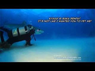 Petting shark - Senpai notice me
