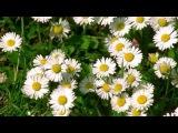 Красивая музыка и цветы для моих друзей!!!