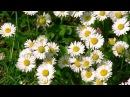 Красивая музыка и цветы для моих друзей