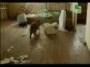 Животные в Чернобыле. Часть 1.