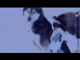 Белый плен,основан на реальных событиях. Собака наш лучший друг!