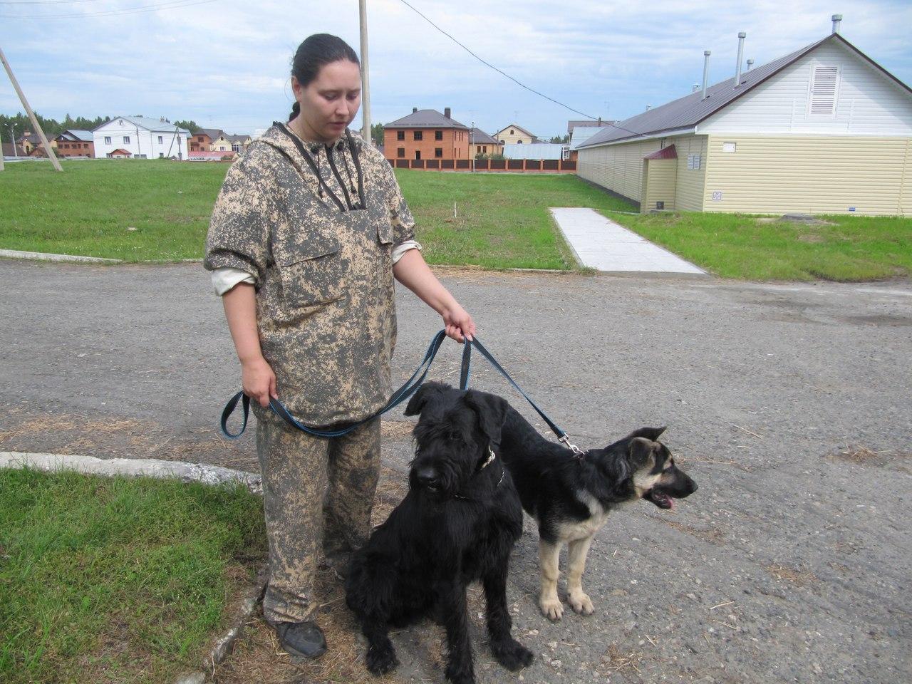 Кинолог Алла Дмитриева: Для наших собак укусить человека без команды - табу 2