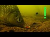 Поклевки на Поплавочную удочку с двух камер. Рыбалка. Ловля карася на поплавочную удочку.fishing