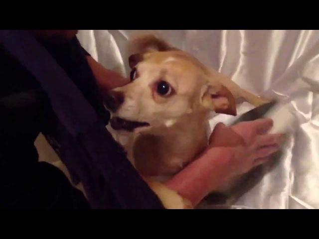 Изгнание демона из собаки. ЭКЗОРЦИЗМ! DOG EXORCISM! (English subtitles)