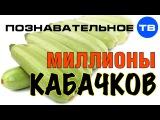 Миллионы кабачков (Познавательное ТВ, Евгений Фёдоров)