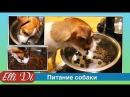 Щенок или собака не ест сухой корм Питание щенка с Elli Di. Кушаем сухой корм для собак.