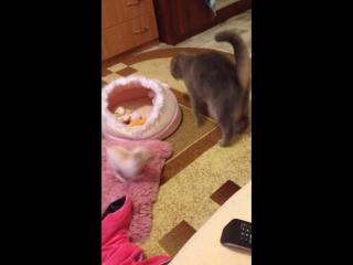 Йоко и Норис играют)