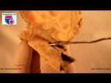Os temporale. Нормальная анатомия височной кости