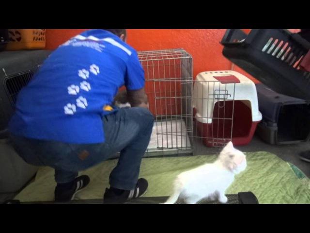 Doğum sancısı tutan kedi aile sağlığı merkezinin kapısına dayandı Bitlis13haber